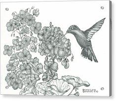Hummingbird  Acrylic Print by Sharon Blanchard