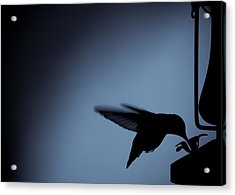 Hummingbird Silhouette Acrylic Print by Edward Myers