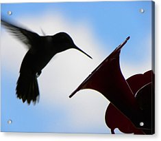 Acrylic Print featuring the photograph Hummingbird Silhouette by Sandi OReilly