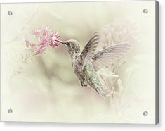 Acrylic Print featuring the photograph Hummingbird Softly by Angie Vogel