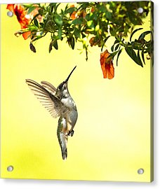Acrylic Print featuring the photograph Hummingbird Under The Floral Canopy by William Jobes