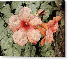 Hummingbird Vine Acrylic Print