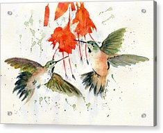 Hummingbird Watercolor Acrylic Print by Melly Terpening