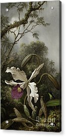 Hummingbird With White Orchid Acrylic Print