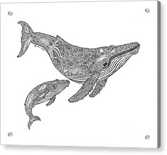 Humpback And Calf Acrylic Print