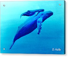 Humpback Mother Whale And Calf  #11 Acrylic Print by Donald k Hall