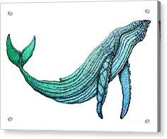 Humpback Whale Acrylic Print by Nick Gustafson