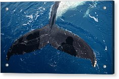 Humpback Whale Tail With Human Shadows Acrylic Print