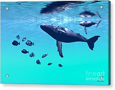 Humpback Whales Acrylic Print by Corey Ford