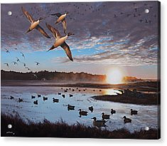 Humphrey Farm Pintails Acrylic Print