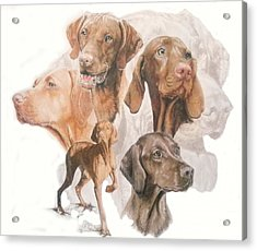 Hungarian Vizsla W/ghost Acrylic Print by Barbara Keith
