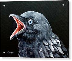 Hungry Baby Raven Acrylic Print