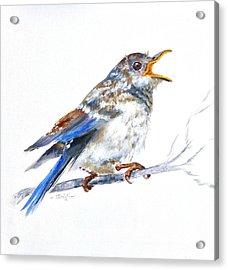 Hungry Fledgling Blue Bird Acrylic Print