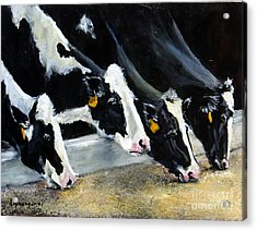 Hungry Holsteins Acrylic Print