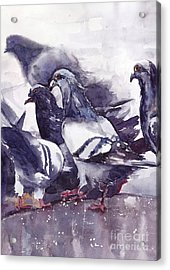 Hungry Pigeons Watercolor Acrylic Print