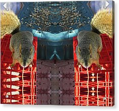 Hungry Squirrels Demanding Sunflower Seeds Acrylic Print