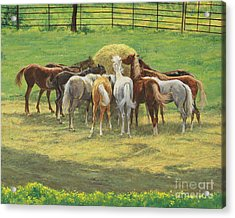 Hungry Yearlings At Big Creek Acrylic Print by Don Langeneckert