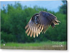 Hunter On Silent Wings Acrylic Print