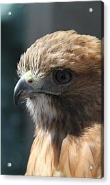Acrylic Print featuring the photograph Hunter's Spirit by Laddie Halupa