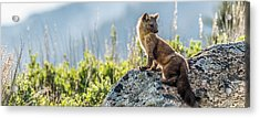 Acrylic Print featuring the photograph Hunting At Dusk by Yeates Photography