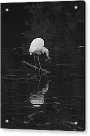 Acrylic Print featuring the photograph Hunting Egret by Joshua House