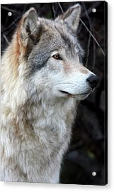 Hunting Eyes - L'oeil Du Chasseur Acrylic Print