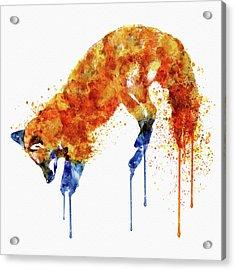Hunting Fox  Acrylic Print