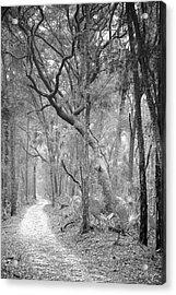 Hunting Island Path  Acrylic Print by Phill Doherty