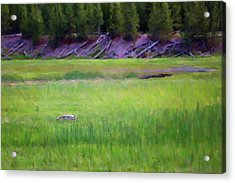 Acrylic Print featuring the photograph Hunting by Sue Collura