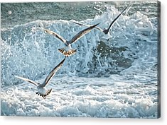 Hunting The Waves Acrylic Print