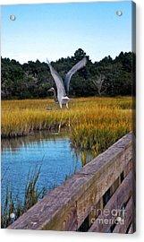 Huntington Beach Heron II Acrylic Print by Jeff McJunkin