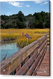 Huntington Beach Heron Acrylic Print by Jeff McJunkin