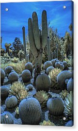 Huntington Botanical Desert Garden In California In Color Infrared Acrylic Print by Randall Nyhof