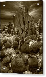 Huntington Botanical Desert Garden In California In Sepia Tone Acrylic Print by Randall Nyhof