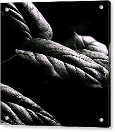 Hushed Acrylic Print by Bonnie Bruno