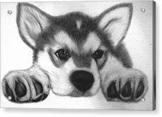 Huskie Pup Acrylic Print by Susan Barwell