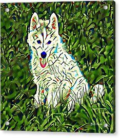 Huskie Watercolor Acrylic Print