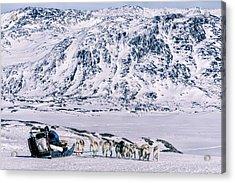 Huskies In Ilulissat, Greenland Acrylic Print