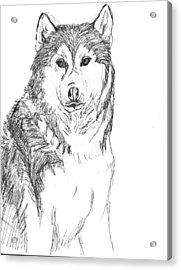 Husky Acrylic Print by Charme Curtin
