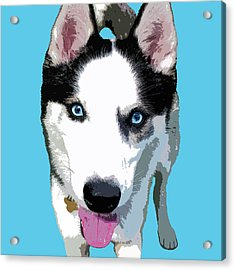 Husky Acrylic Print