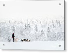 Acrylic Print featuring the photograph Husky Safari by Delphimages Photo Creations