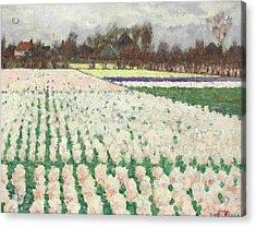 Hyacinth Fields Acrylic Print by George Hitchcock