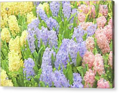 Acrylic Print featuring the photograph Hyacinth Flowers In The Spring Garden by Jennie Marie Schell
