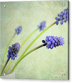 Hyacinth Grape Acrylic Print by Lyn Randle