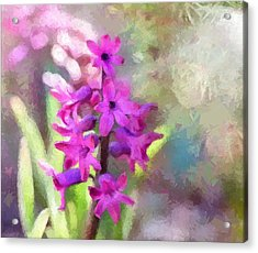 Hyacinth Acrylic Print by Louise Lavallee