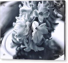 Hyacinth Plated Acrylic Print by Susan Capuano
