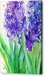 Hyacinths At Debbie's Acrylic Print