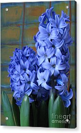Acrylic Print featuring the photograph Hyacinths by Patricia Januszkiewicz