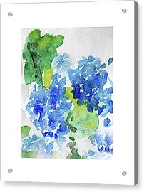 Hydranga Acrylic Print
