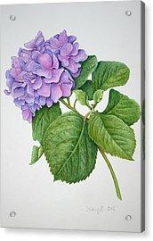 Acrylic Print featuring the painting Hydranga by Margit Sampogna